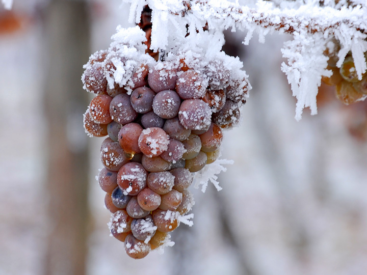ice-wine-2